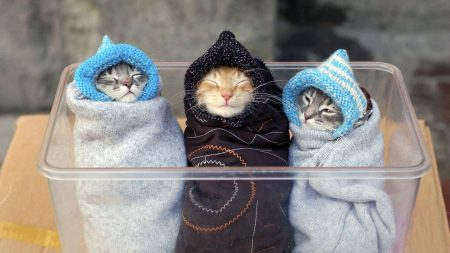 kittens, caring, warm
