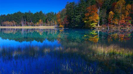 lake, grass, water