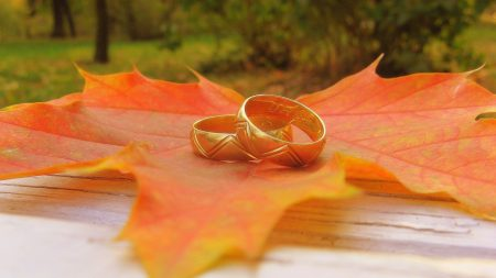 leaf, maple, rings