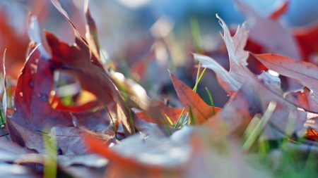 leaves, autumn, grass
