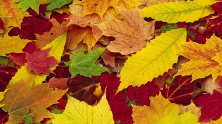 leaves, yellow, red