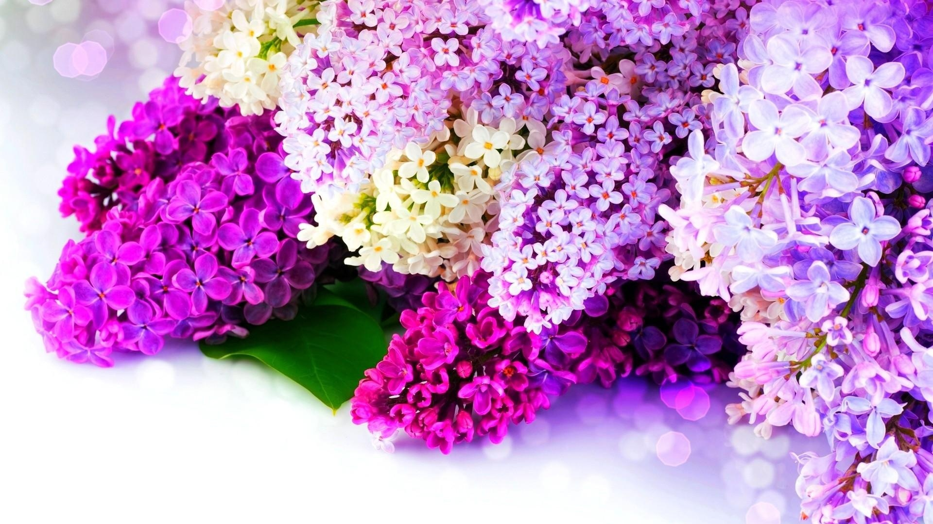 Download Wallpaper 1920x1080 Lilac Sidetrack Spring Glare Full HD