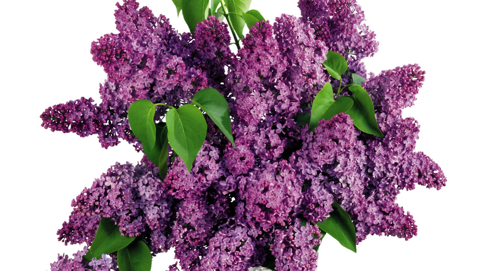 Download Wallpaper 1920x1080 Lilacs, Bouquet, Vase, Spring