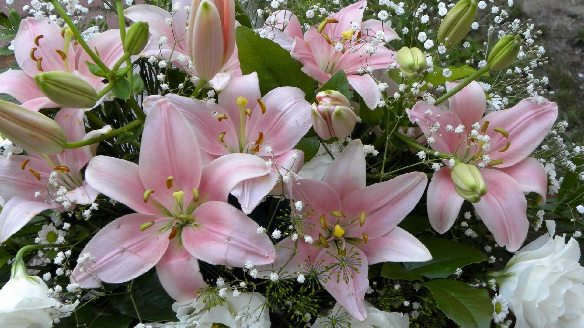 Download wallpaper 1920x1080 lilies flowers gypsophila flower get the latest lilies flowers gypsophila news pictures and videos and learn all about lilies flowers gypsophila from wallpapers4u your wallpaper izmirmasajfo