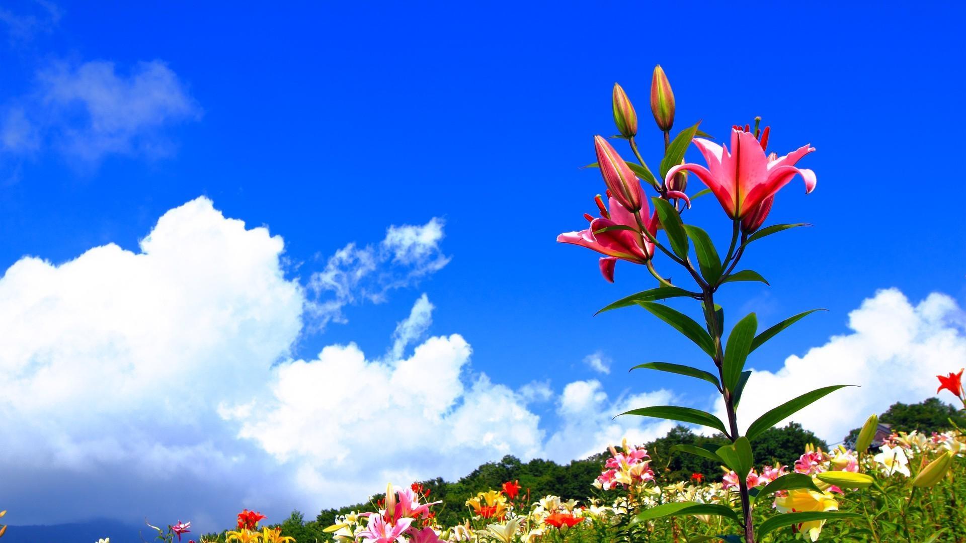 Эта картинка 66828, с разрешением 1152x864 на тему: арт, бабочки, landscape, радуга, nature, небо, цветы, настроение