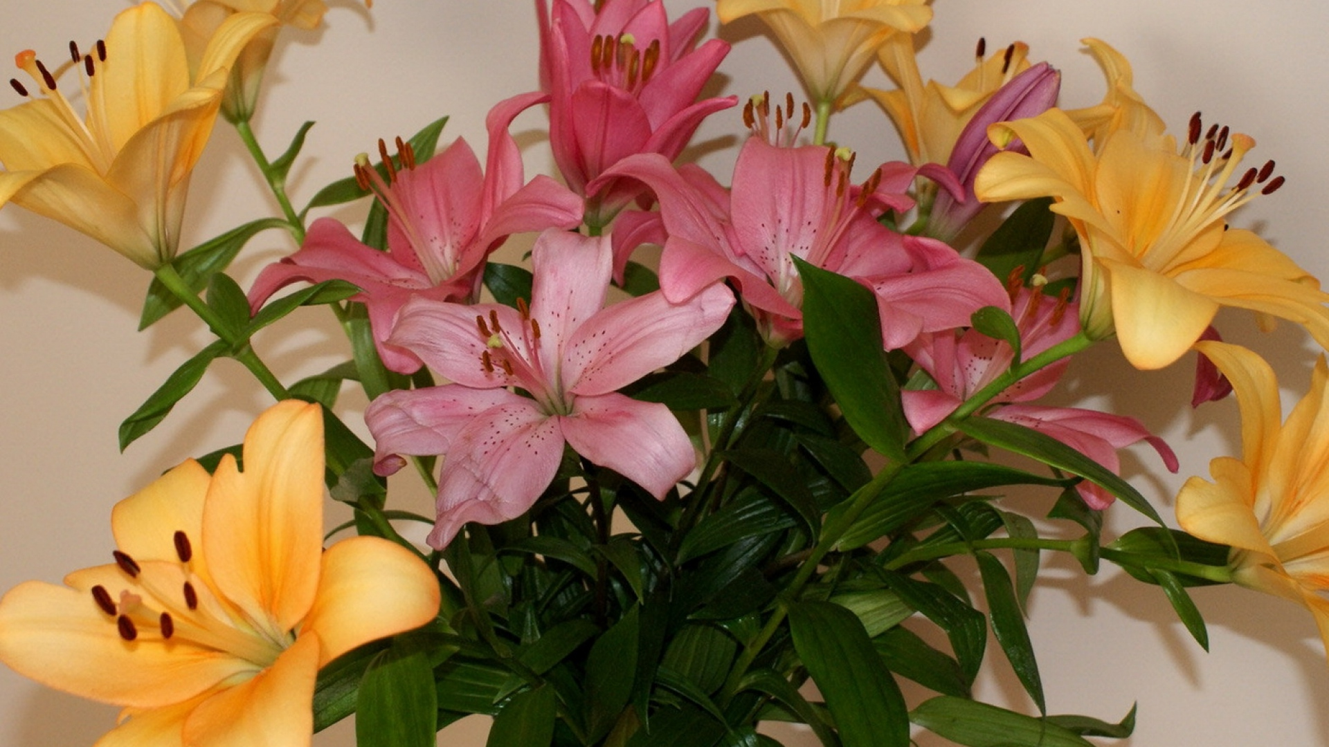Download wallpaper 1920x1080 lily bouquet different stamens vase lily bouquet different izmirmasajfo Image collections