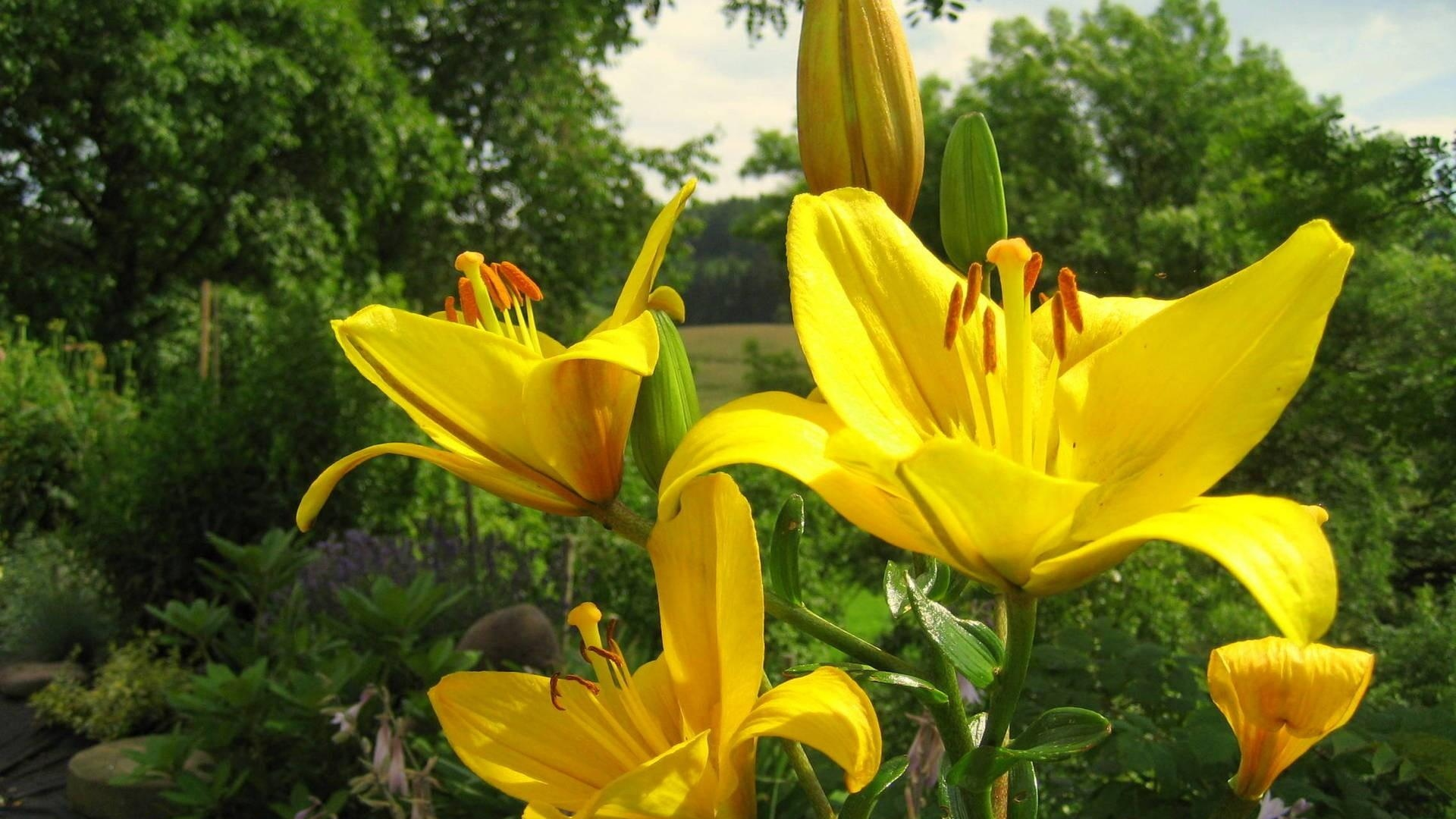 Download wallpaper 1920x1080 lily flower yellow bud water get the latest lily flower yellow news pictures and videos and learn all about lily flower yellow from wallpapers4u your wallpaper news source izmirmasajfo