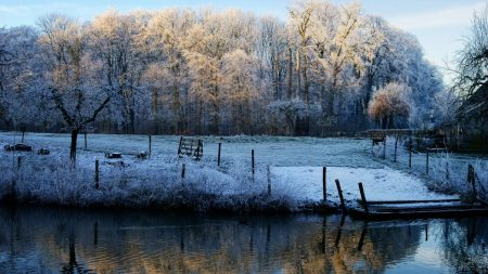 morning, lake, frost