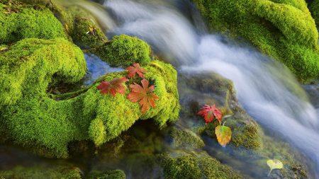 moss, leaves, river