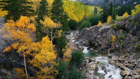 mountain river, autumn, tree