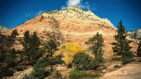 mountain, trees, autumn