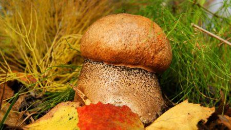 Заставки на рабочий стол грибы в лесу