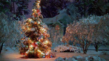 new year, christmas, tree