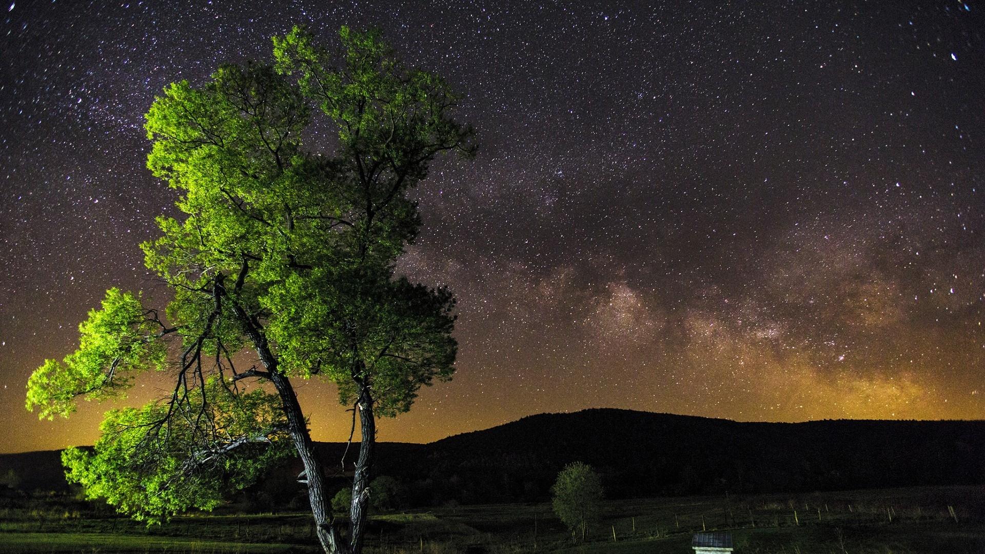 Download Wallpaper 1920x1080 Night Sky Stars Tree Full Hd 1080p