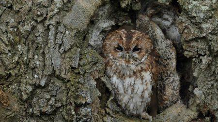 owl, bird, bark