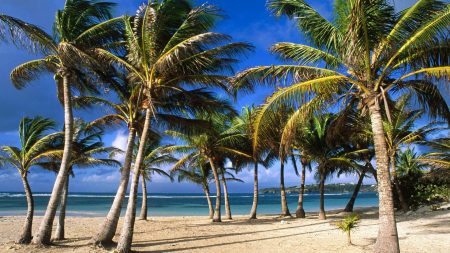 palm trees, coast, sea