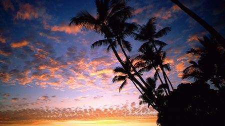 palm trees, coast, silhouettes