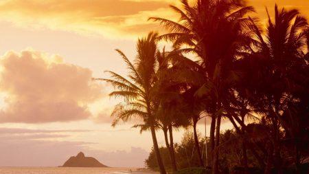 palm trees, coast, sunlight
