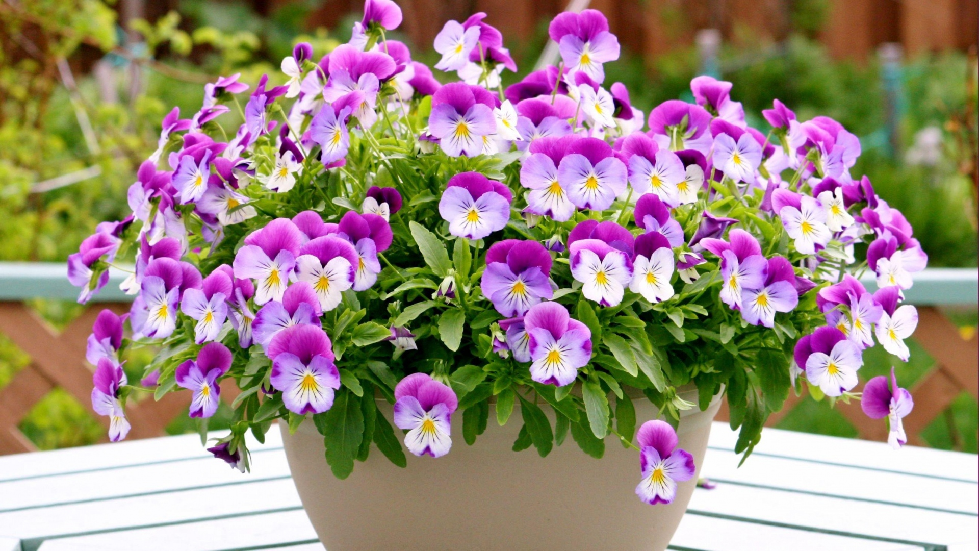 Download Wallpaper pansies flowers pots herbs Full HD