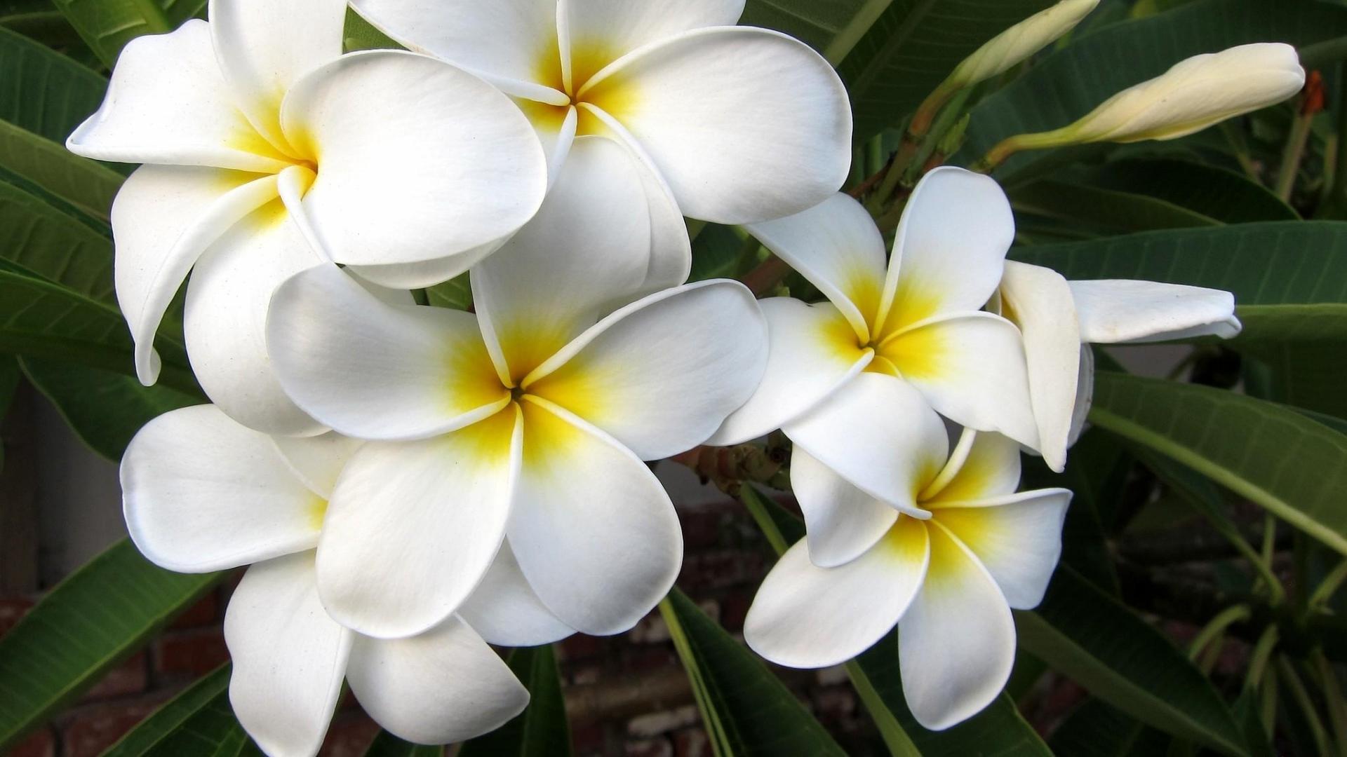 Фото цветы экзотика