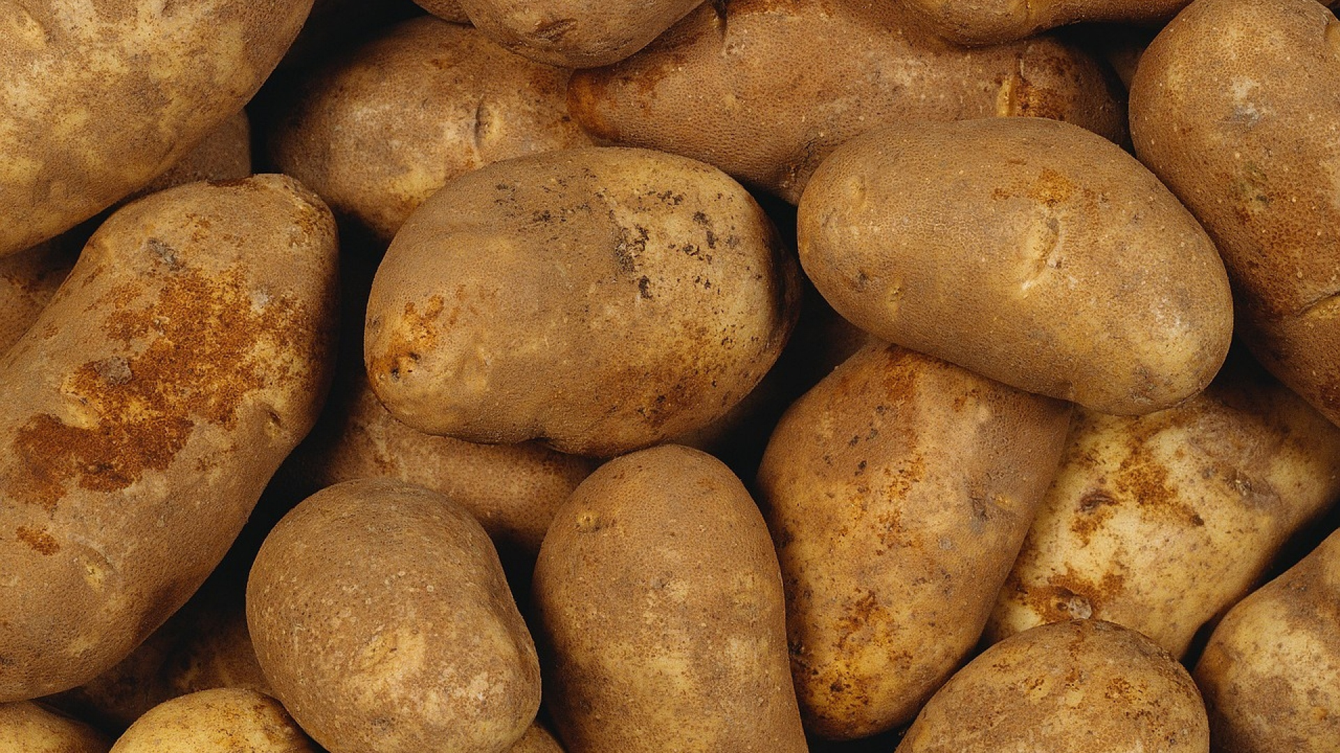 vegetable and mountain states potato The mountain states are the meat and potatoes country because of the rapid settlement of the area prospectors and others heading to california by wagon two main routes run through the rocky mountain states: oregon trail and the santa fe trail.