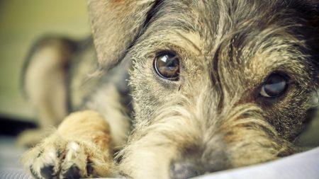 puppy, dog, face