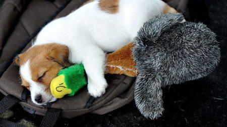 puppy, dog, toys