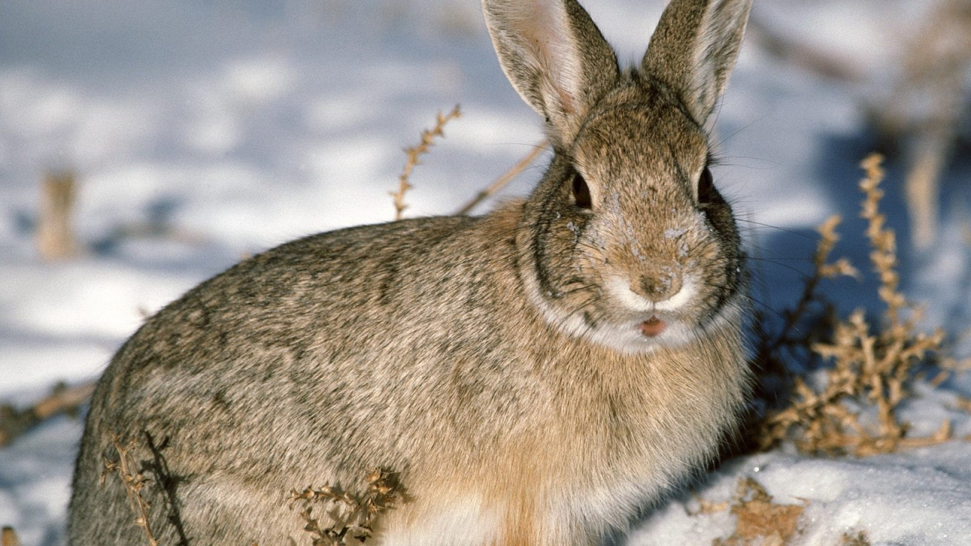 how to get rid of rabbits in winter