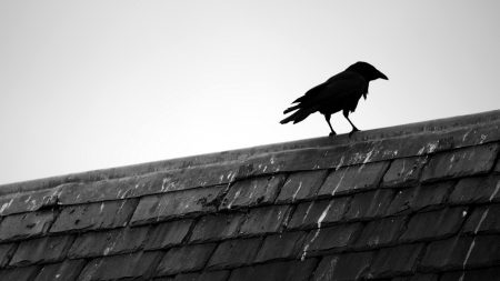 how to get rid of ravens on roof