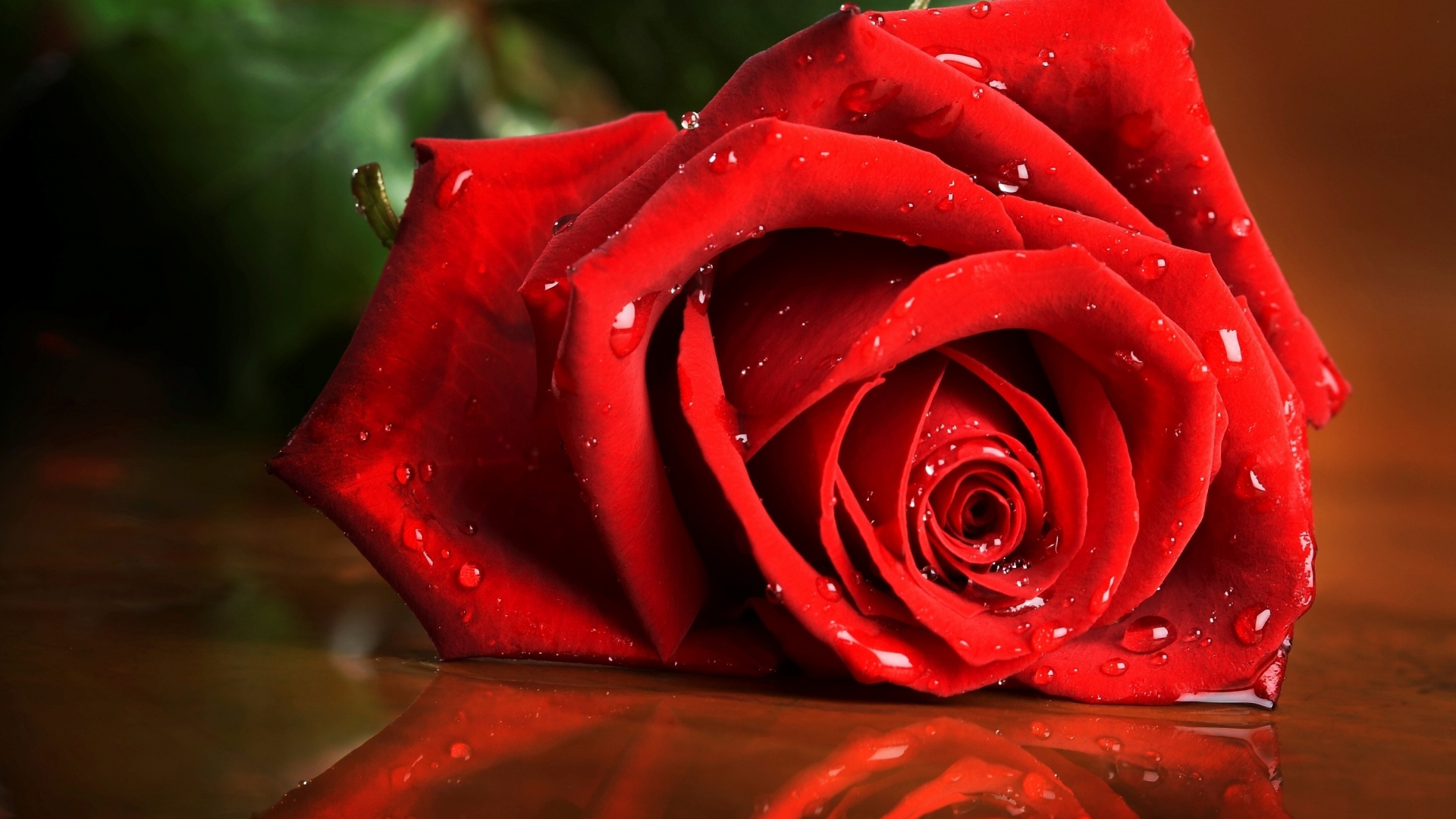 Get The Latest Red Rose Drops News Pictures And Videos Learn All About From Wallpapers4uorg Your Wallpaper Source