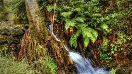 river, creek, nature