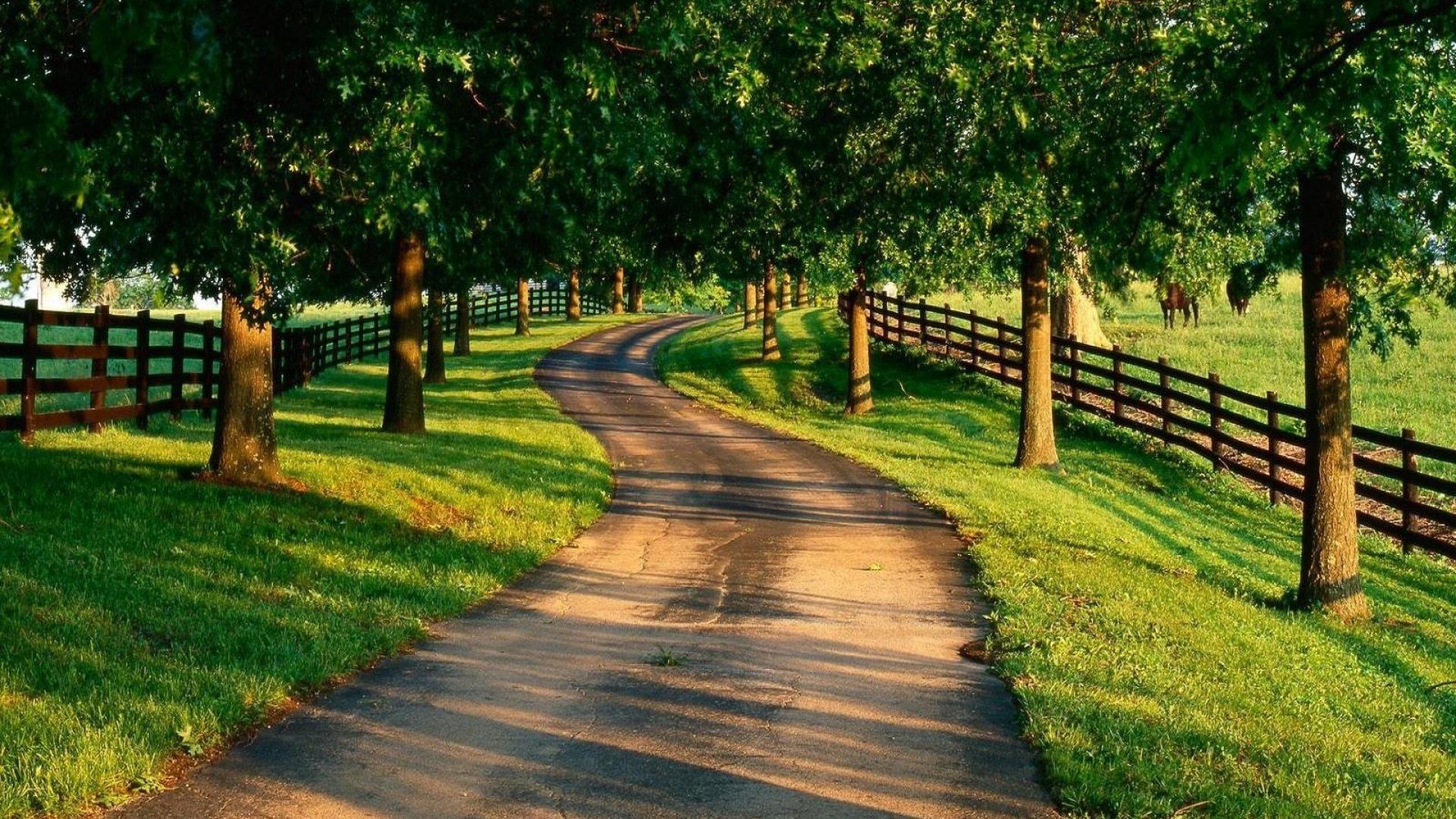 Road, Garden, Track