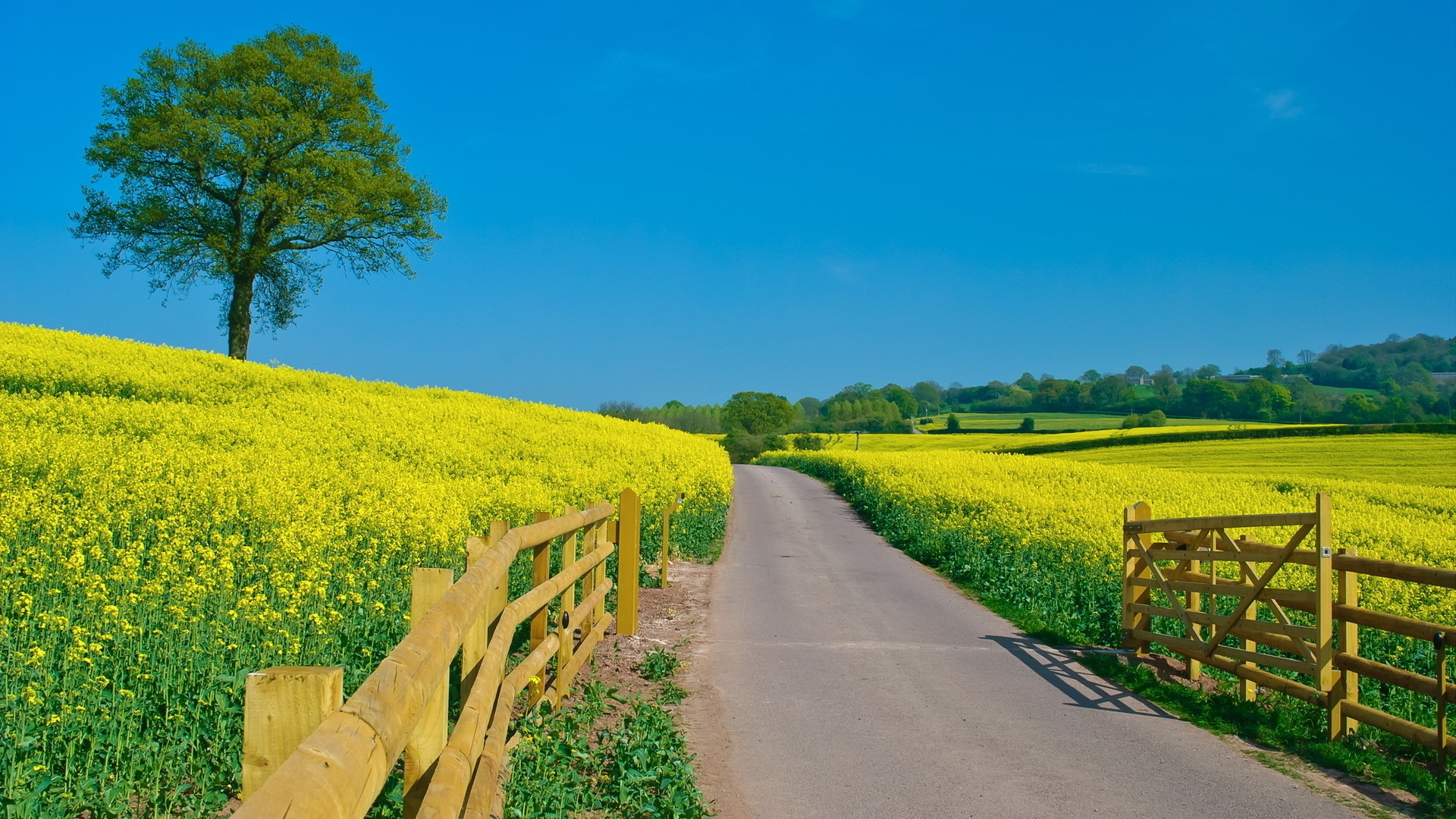 Get The Latest Road Protection Summer News Pictures And Videos Learn All About From Wallpapers4uorg Your Wallpaper
