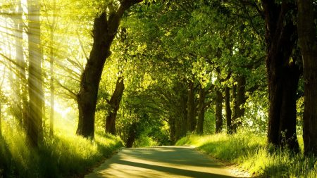 road, trees, sunlight
