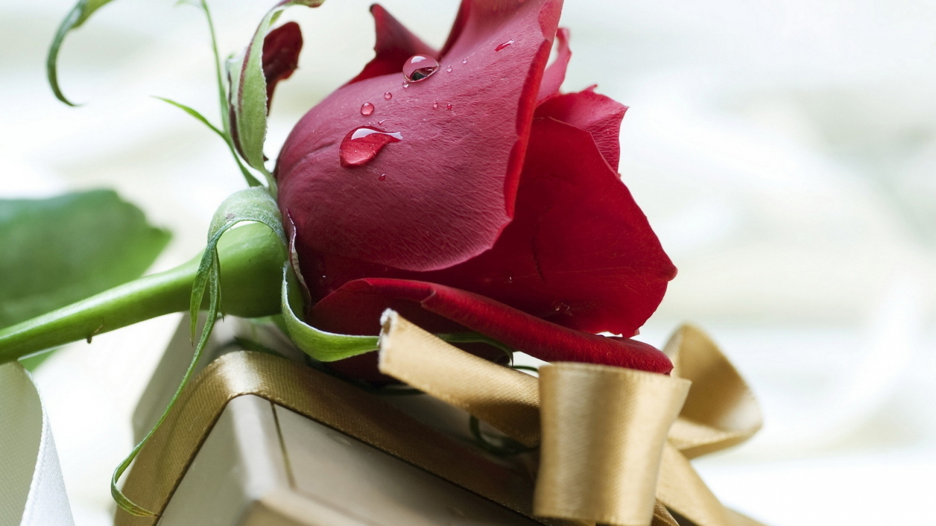 Download wallpaper 1920x1080 rose drop gift holiday flower full rose drop gift negle Gallery