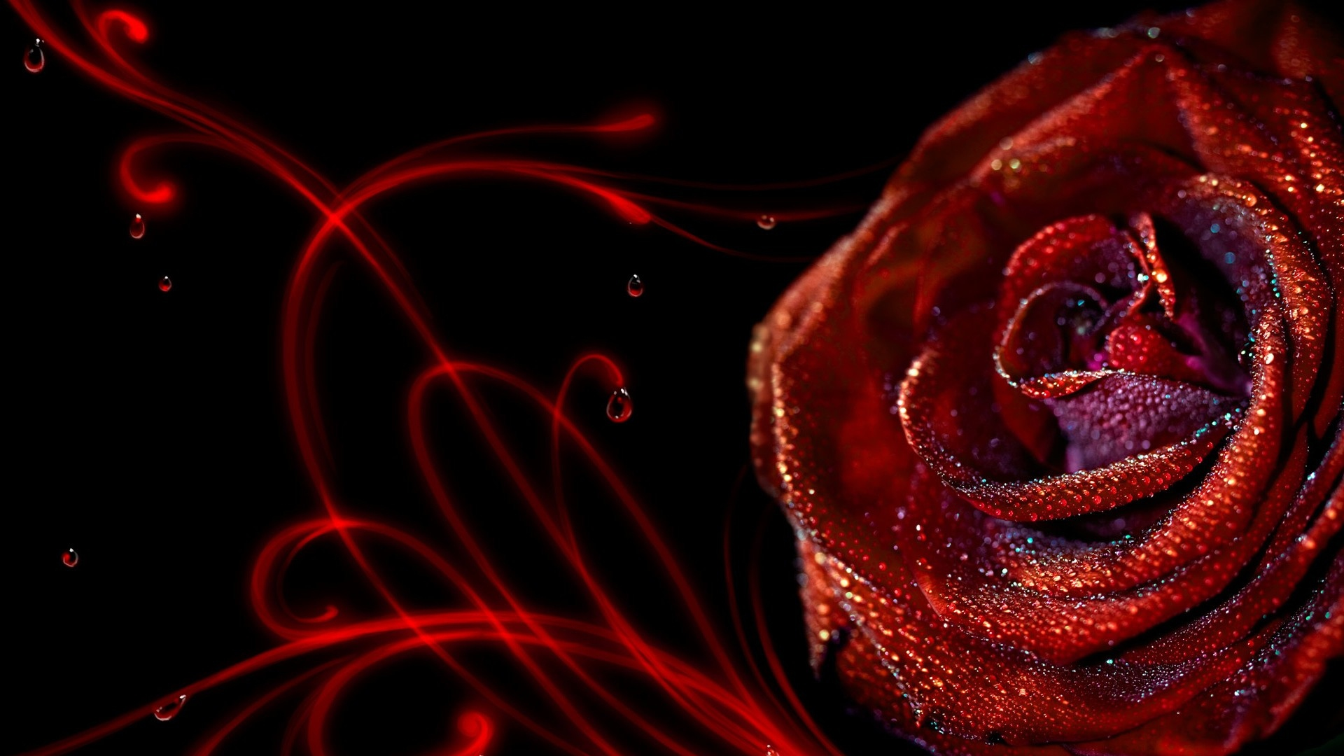 Get The Latest Rose Flower Macro News Pictures And Videos Learn All About From Wallpapers4uorg Your Wallpaper Source