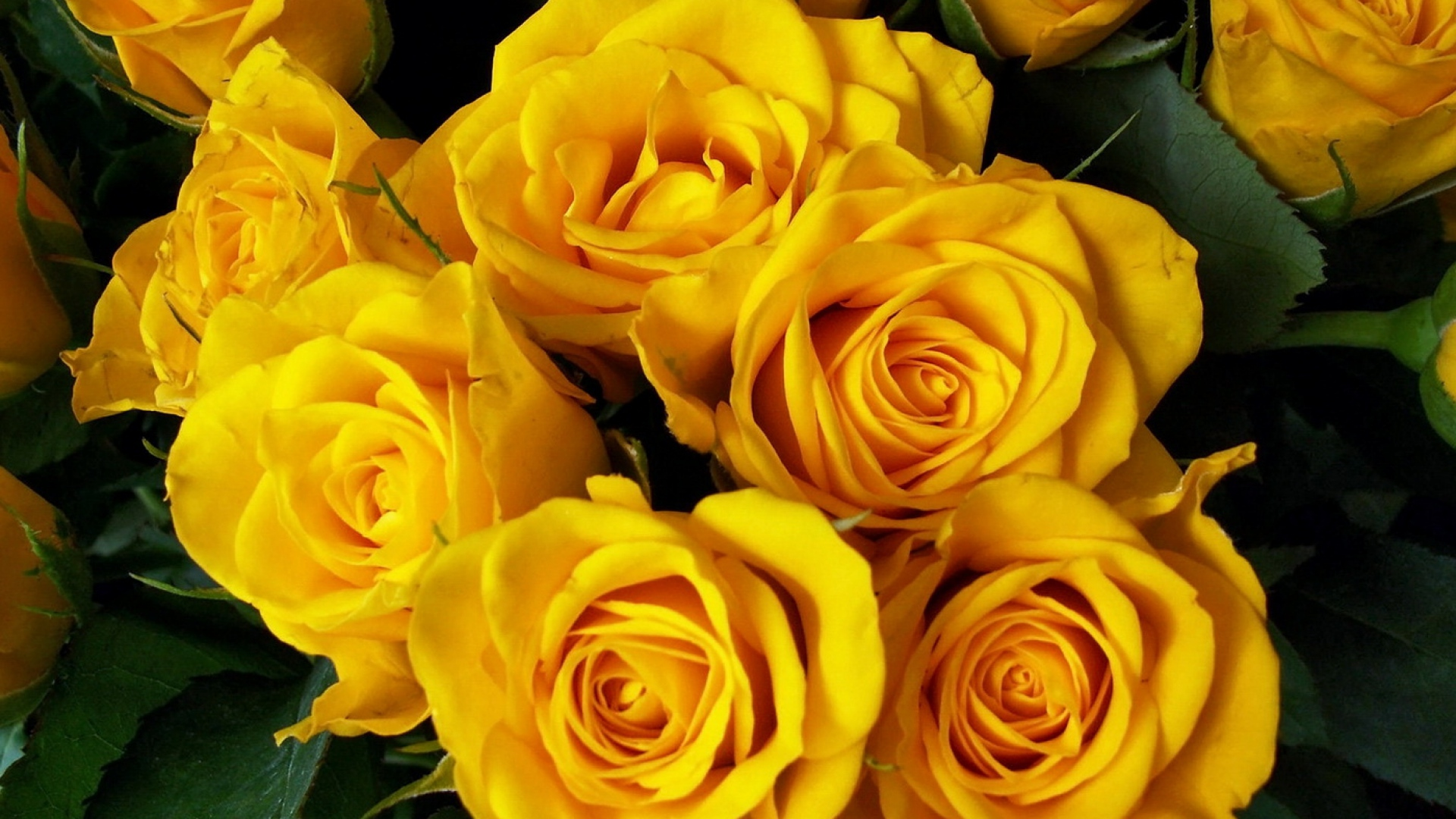 download wallpaper 1920x1080 roses, flower, yellow, bright