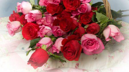roses, flowers, lot