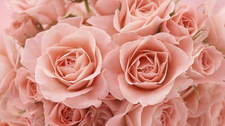 roses, tea, flowers