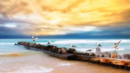 seagulls, logs, birds