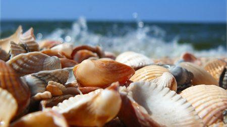 shells, sea, shore