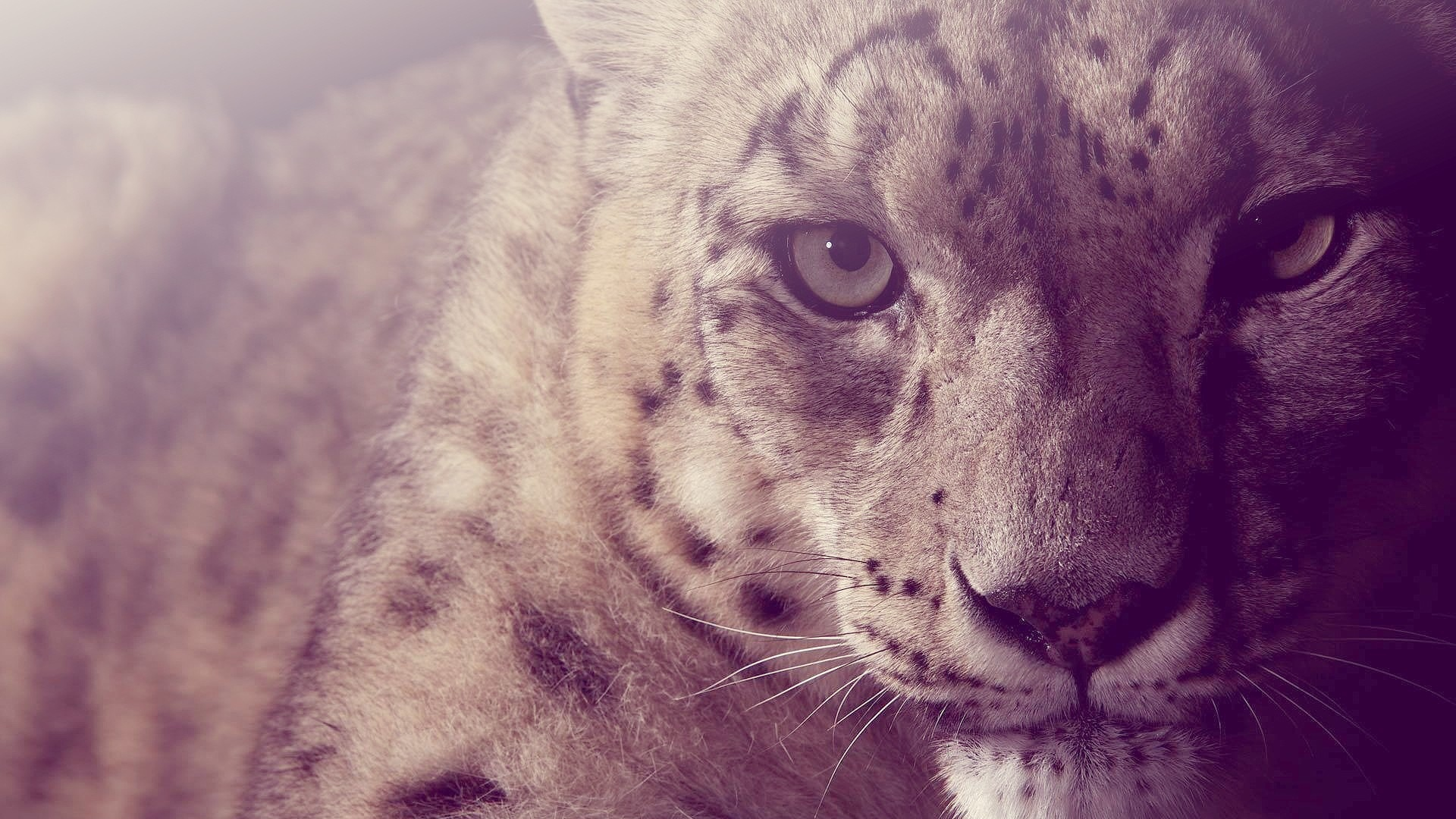 Snow Leopard Glare Light