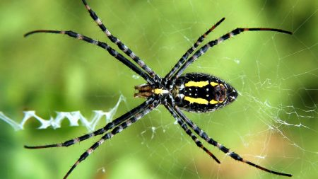 spider, web, legs