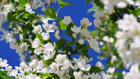 spring, branch, flower