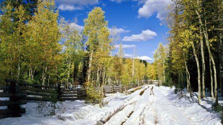 spring, trees, snow