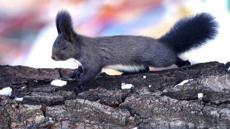 squirrel, wood, bark