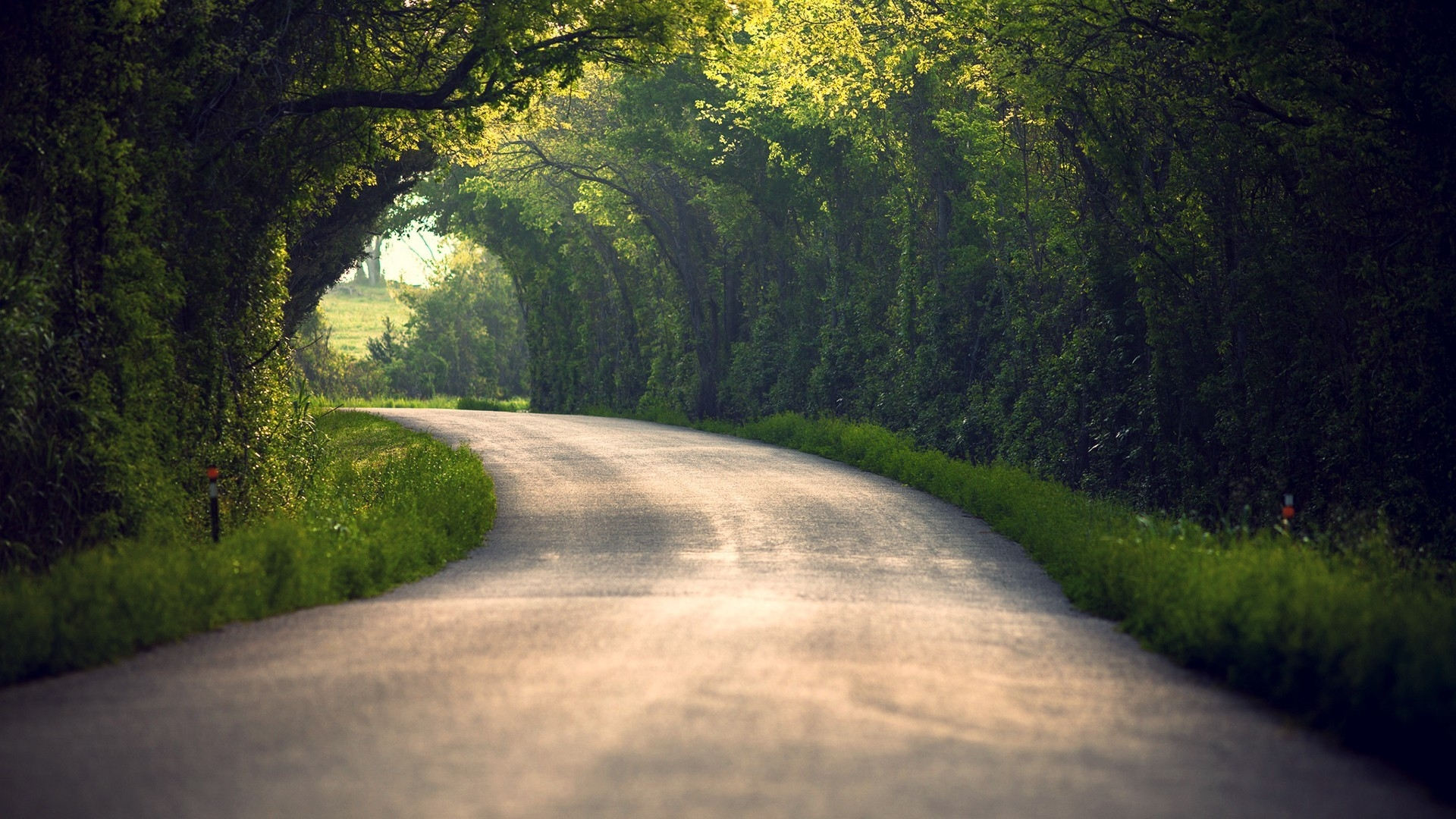 Download Wallpaper 1920x1080 Summer Nature Road Leaves Trees