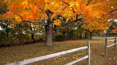 tree, autumn, fence