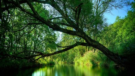 tree, river, summer