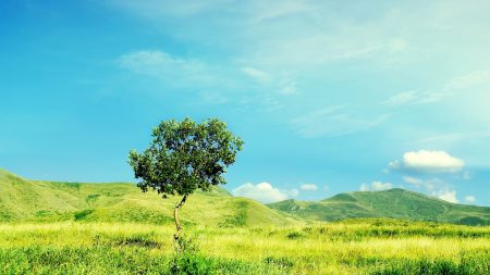 tree, summer, day